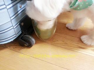 グリーン青汁犬1.jpg